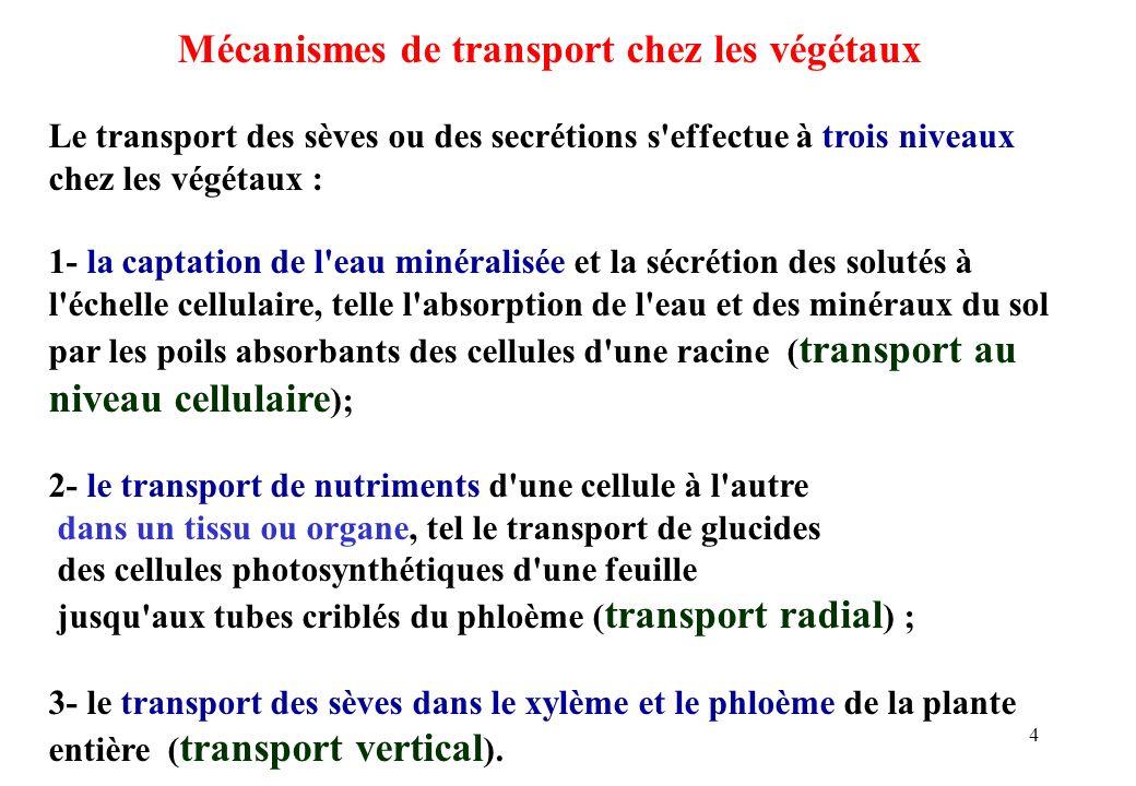 Mécanismes de transport chez les végétaux