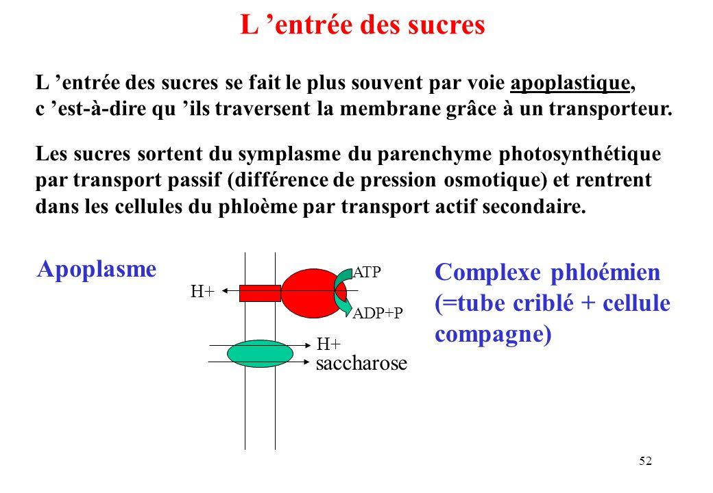 L 'entrée des sucres Apoplasme Complexe phloémien
