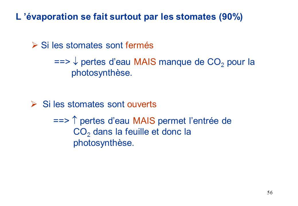 L 'évaporation se fait surtout par les stomates (90%)