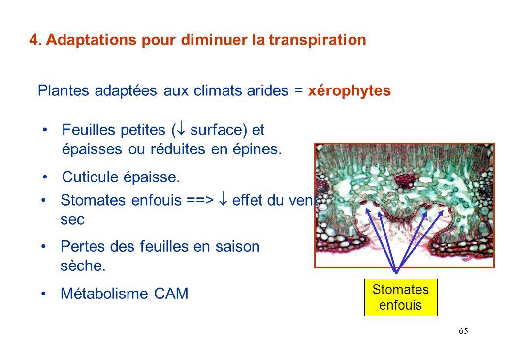 4. Adaptations pour diminuer la transpiration