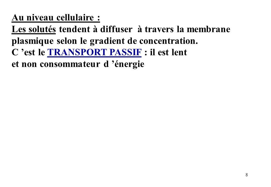 Au niveau cellulaire : Les solutés tendent à diffuser à travers la membrane plasmique selon le gradient de concentration.