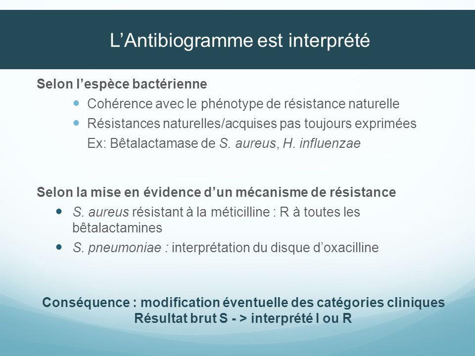 L'Antibiogramme est interprété