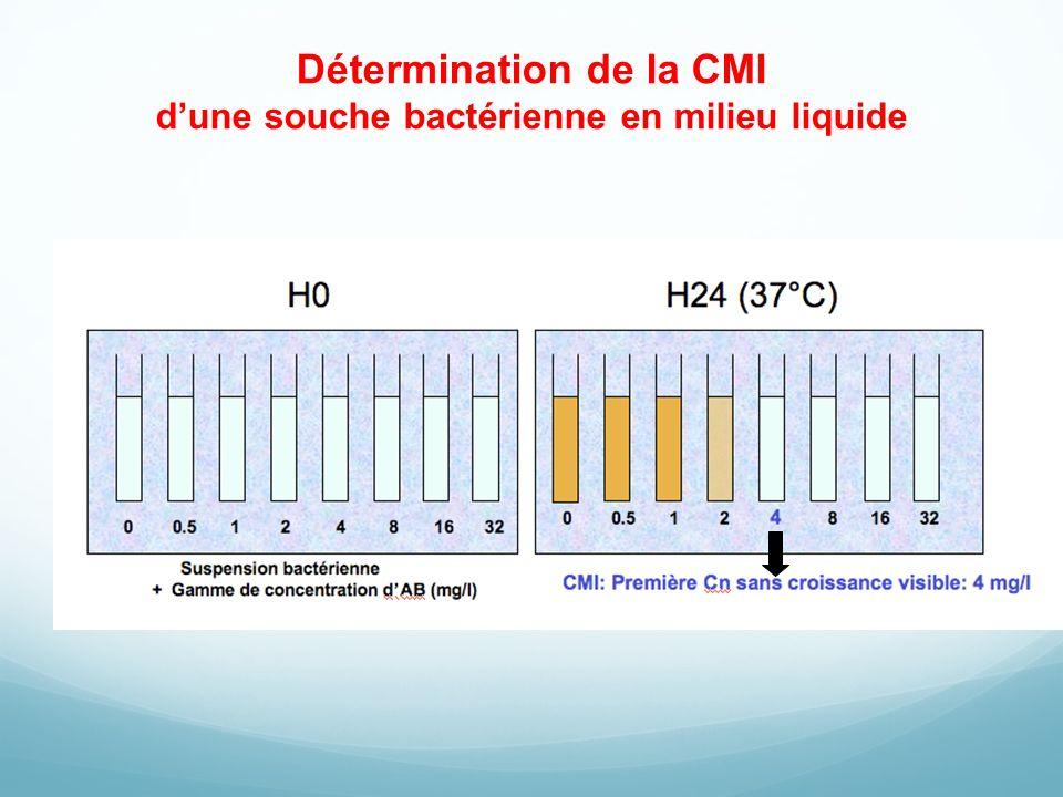 Détermination de la CMI d'une souche bactérienne en milieu liquide