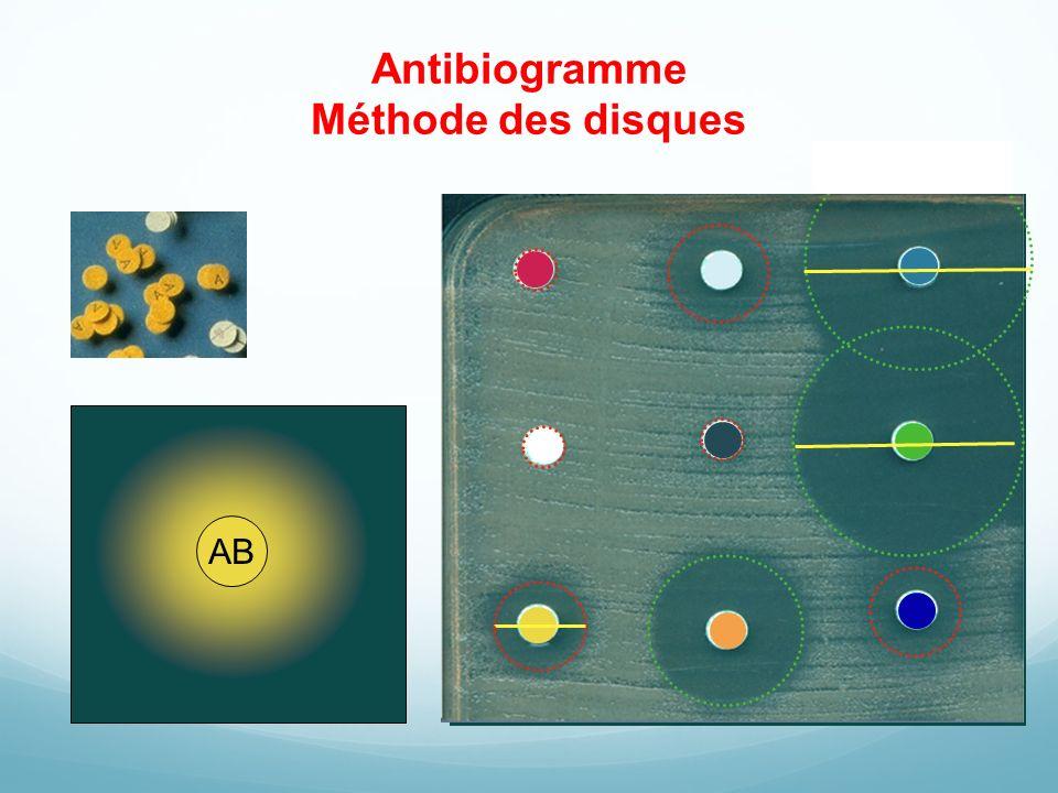 Antibiogramme Méthode des disques