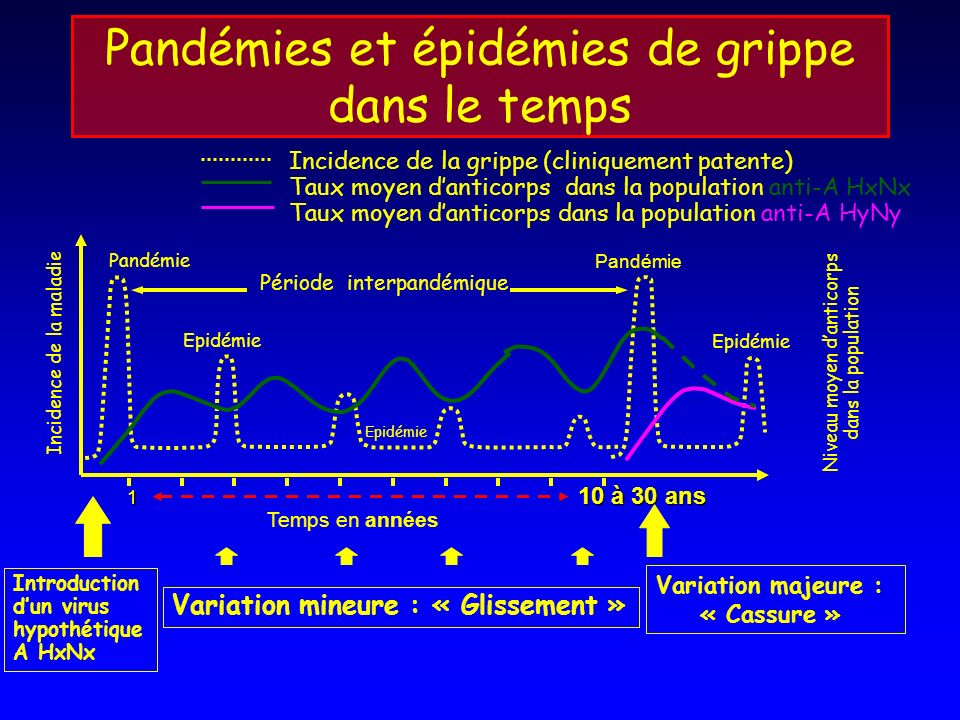 Pandémies et épidémies de grippe dans le temps