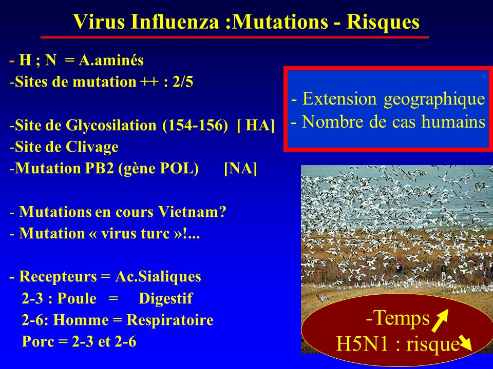 Virus Influenza :Mutations - Risques
