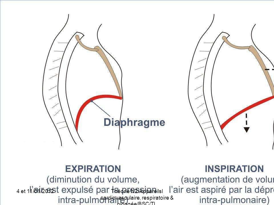 Théorie N2/Appareilsl cardiovasculaire, respiratoire & plongée/BSC/TL