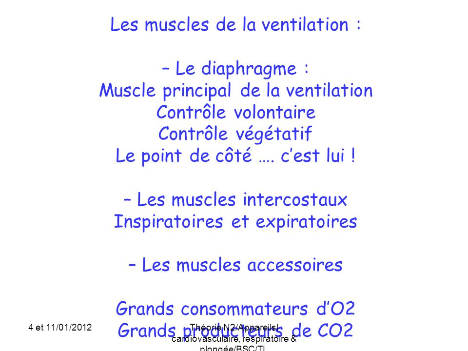 Les muscles de la ventilation : – Le diaphragme :