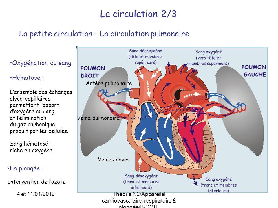 La circulation 2/3 La petite circulation – La circulation pulmonaire