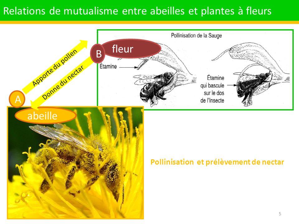 Pollinisation et prélèvement de nectar