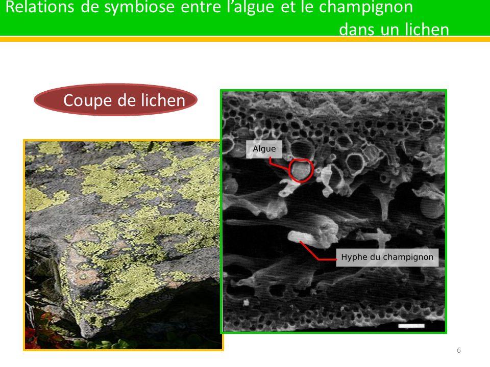 Relations de symbiose entre l'algue et le champignon dans un lichen