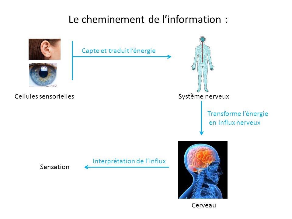 Parcours sensoriel s ance 2 le cerveau ppt video for Le cerveau en miroir