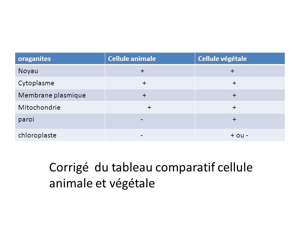 Corrigé du tableau comparatif cellule animale et végétale