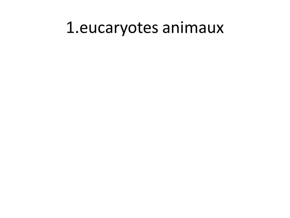 1.eucaryotes animaux