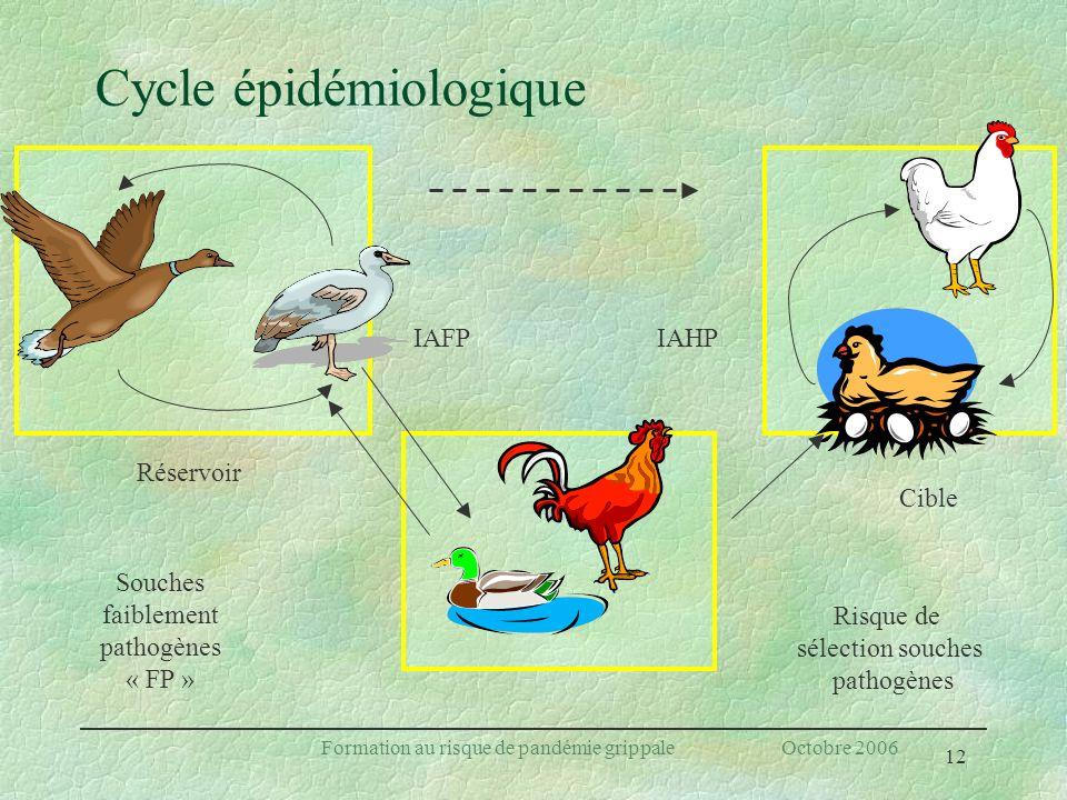 Cycle épidémiologique