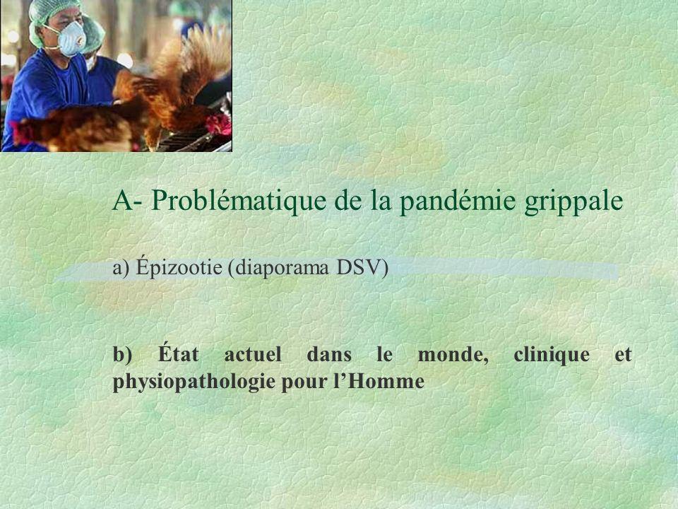 A- Problématique de la pandémie grippale