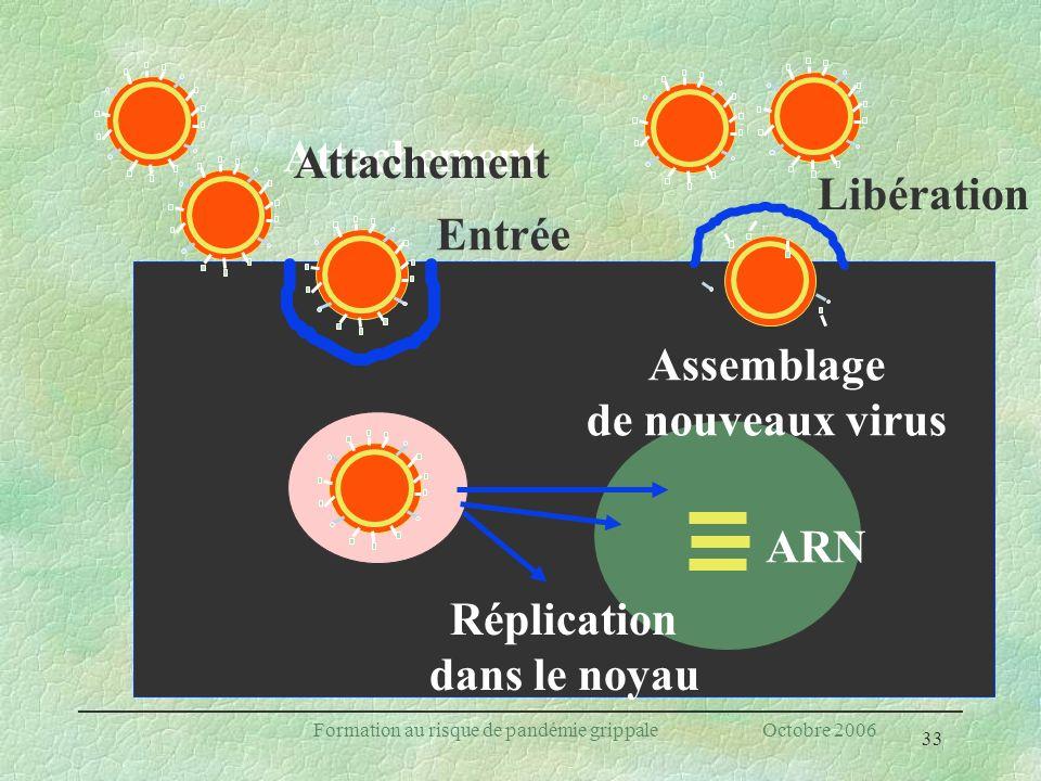 Assemblage de nouveaux virus Réplication dans le noyau