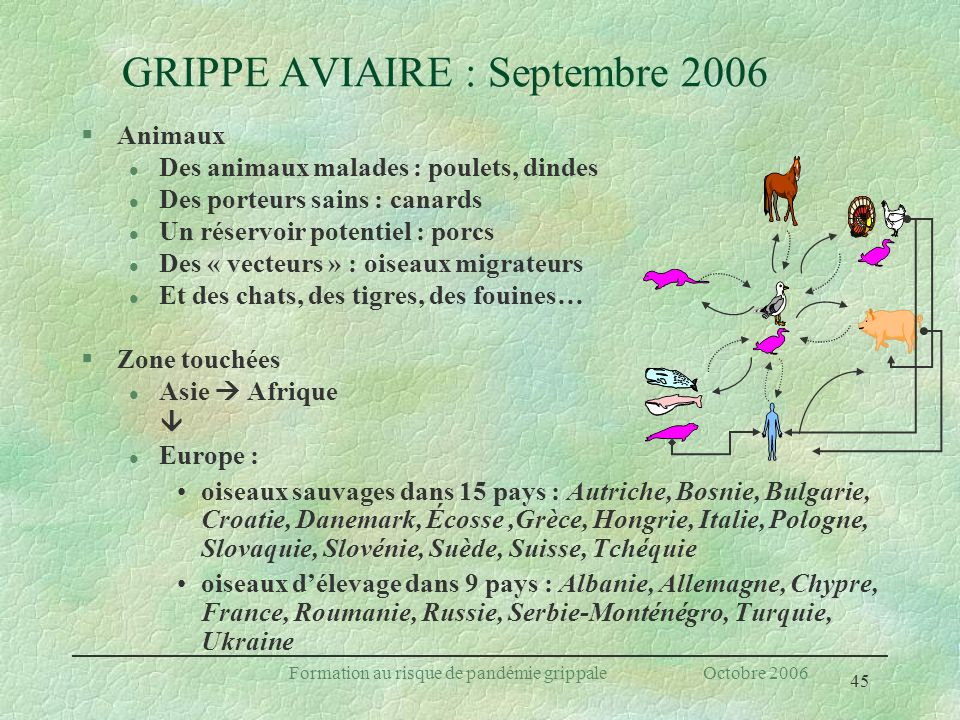 GRIPPE AVIAIRE : Septembre 2006