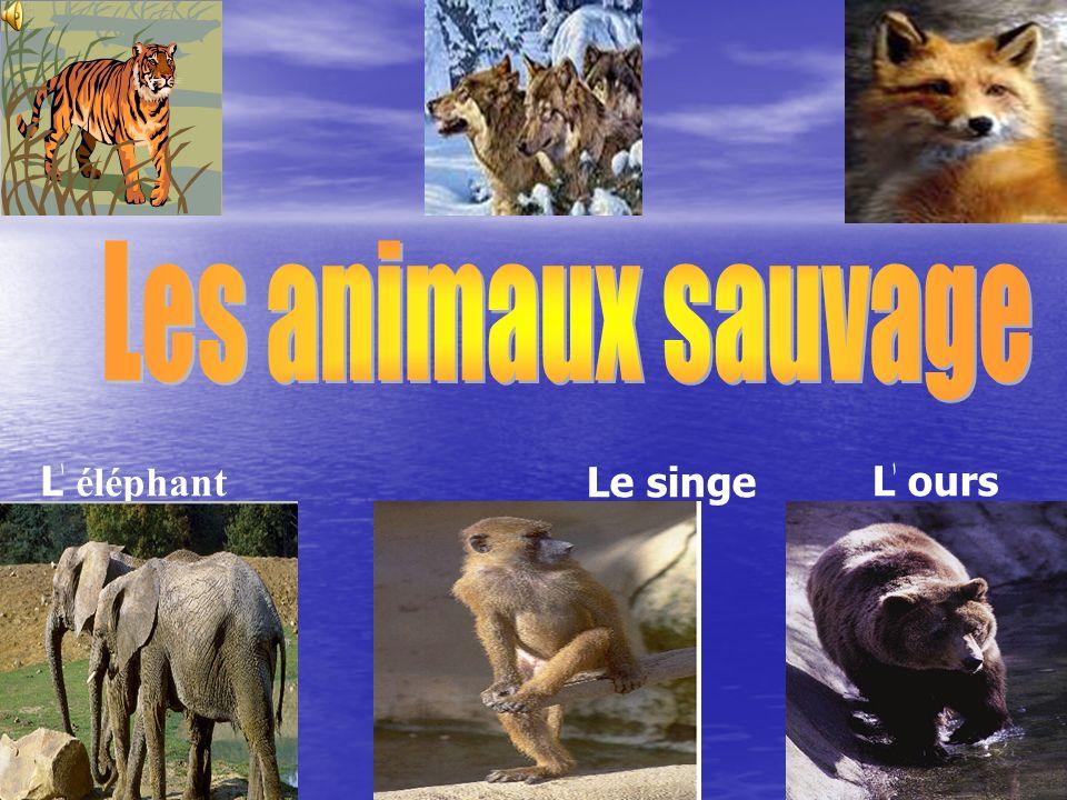Les animaux sauvage Lٰ éléphant Le singe Lٰ ours