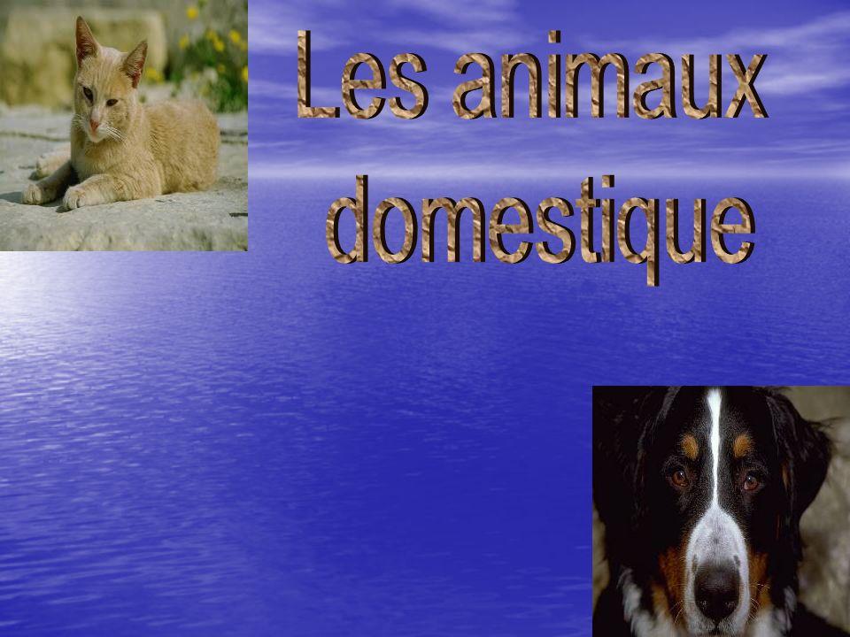 Les animaux domestique