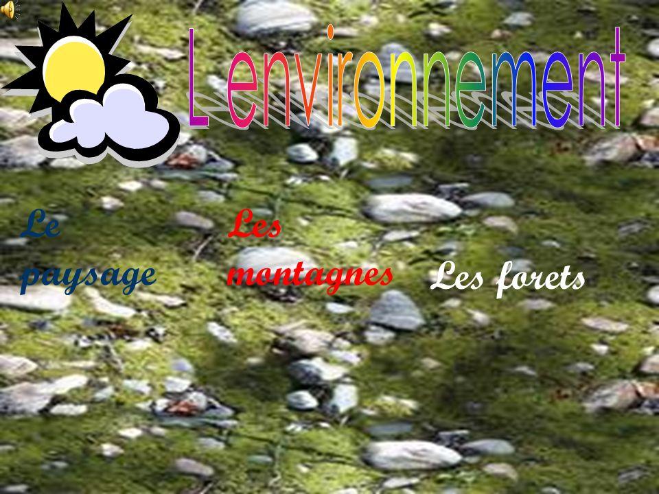 L environnement Le paysage Les montagnes Les forets