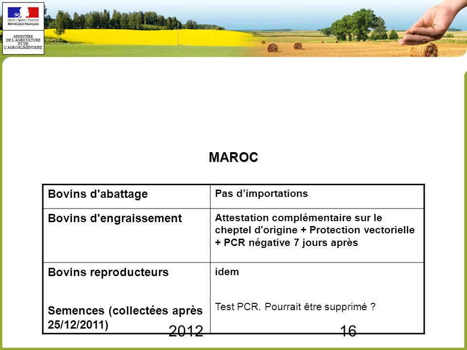 MAROC 2012 Bovins d abattage Bovins d engraissement