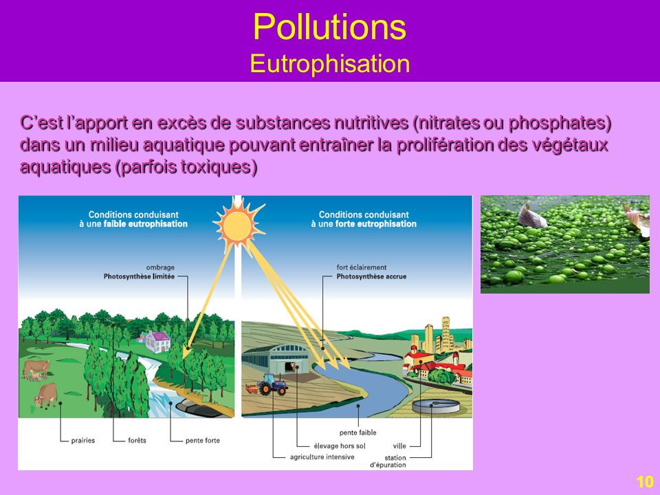 Pollutions Eutrophisation