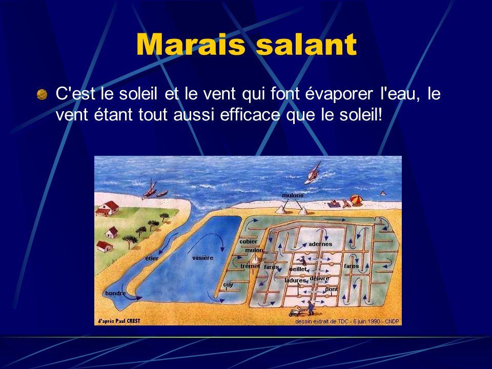 Marais salant C est le soleil et le vent qui font évaporer l eau, le vent étant tout aussi efficace que le soleil!