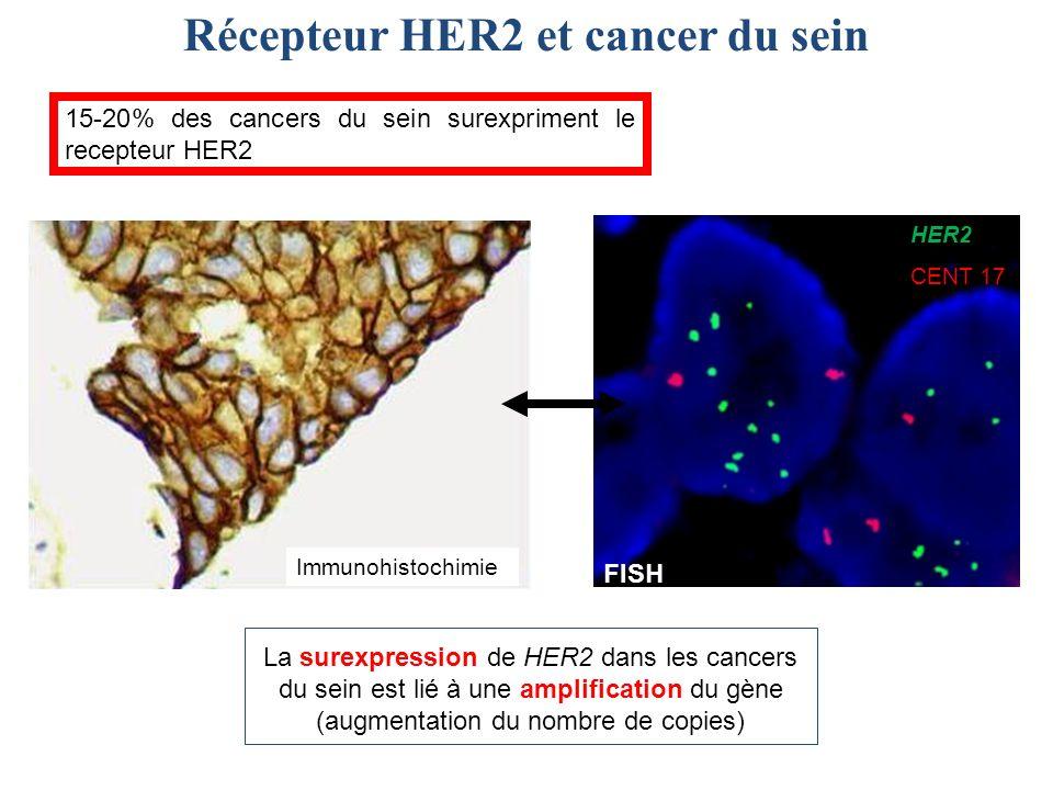Cancer du sein - Traitement cibl pour cancers agressifs