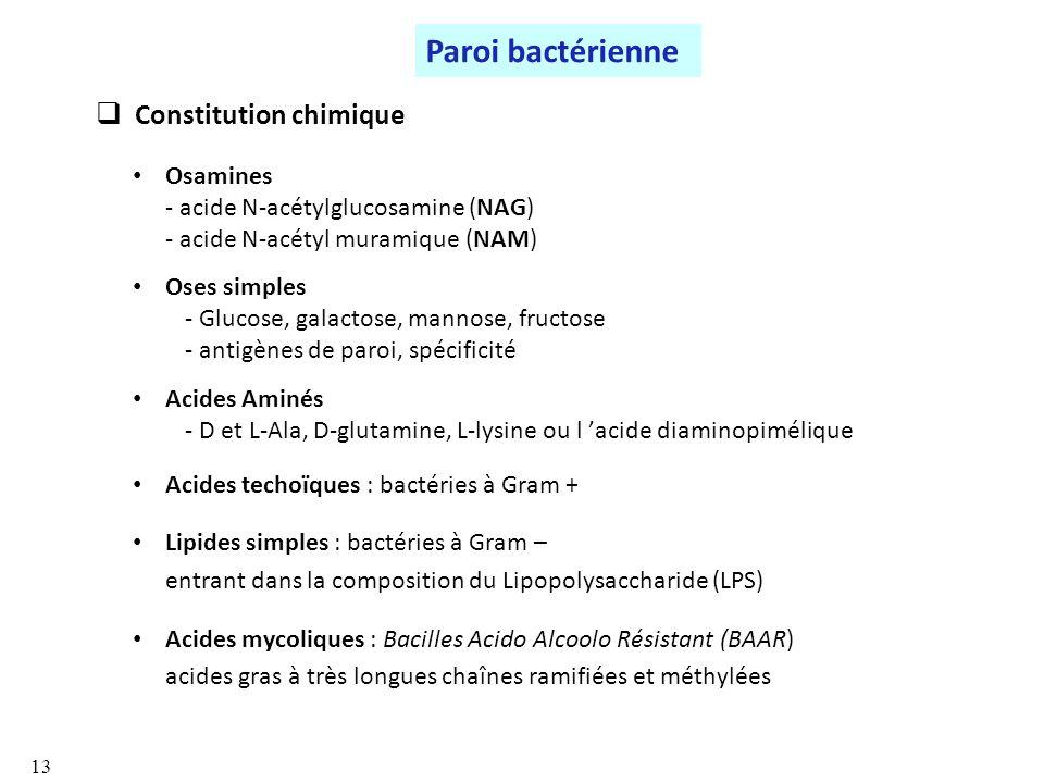 Constitution chimique