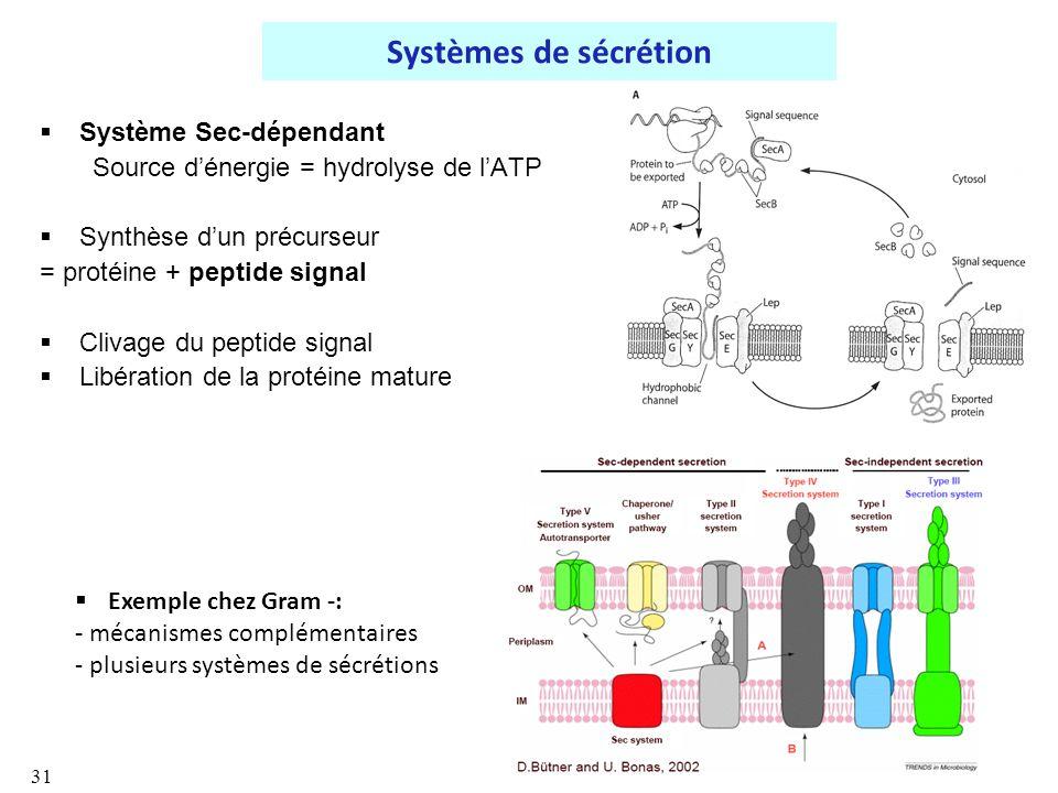 Systèmes de sécrétion Système Sec-dépendant