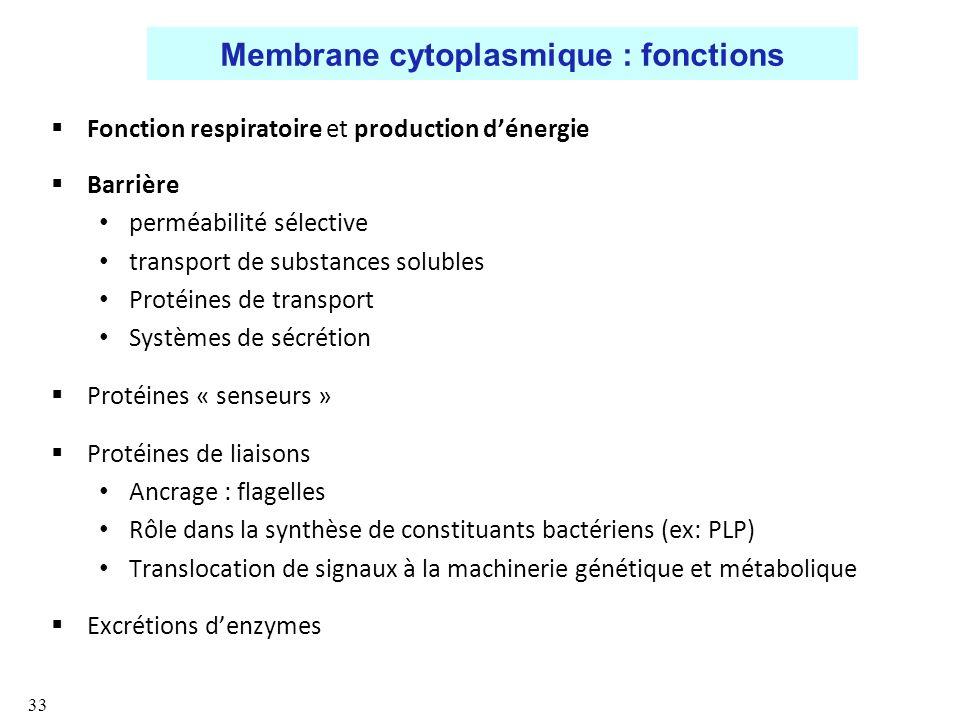 Membrane cytoplasmique : fonctions