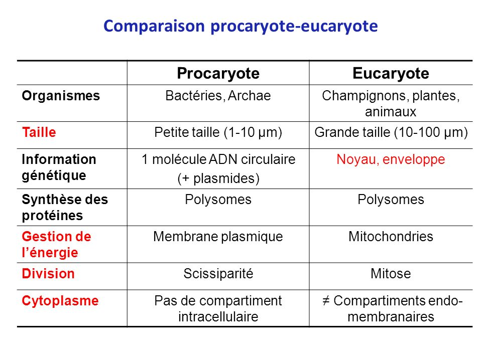 Comparaison procaryote-eucaryote