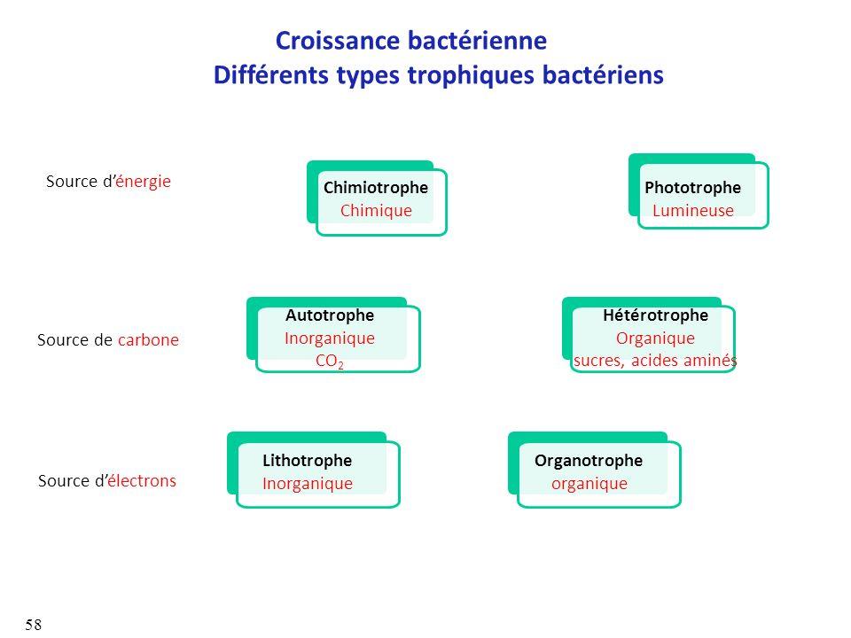 Croissance bactérienne