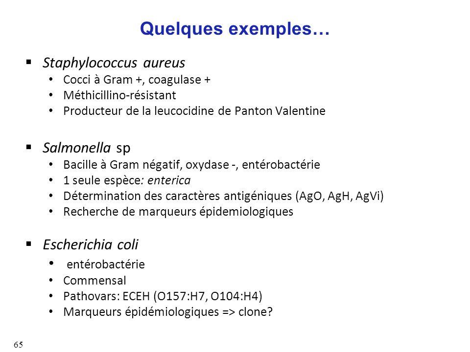 Quelques exemples… Staphylococcus aureus Salmonella sp