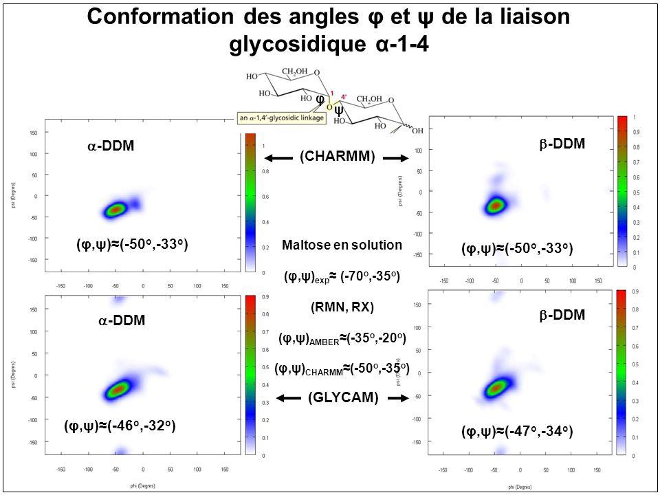 Conformation des angles φ et ψ de la liaison glycosidique α-1-4