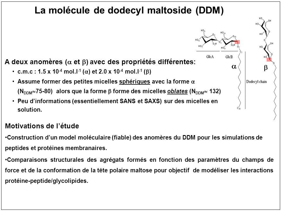 La molécule de dodecyl maltoside (DDM)