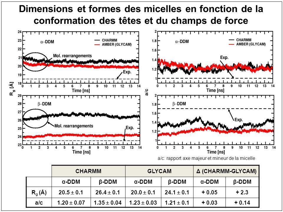 Dimensions et formes des micelles en fonction de la conformation des têtes et du champs de force