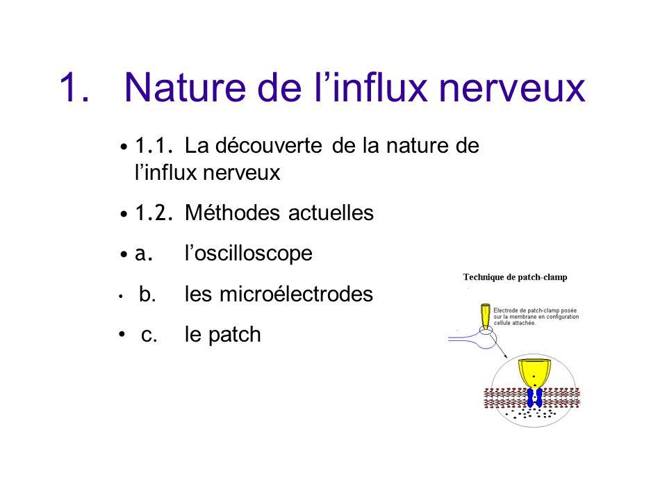 Le fonctionnement du neurone ppt t l charger for Influx nerveux