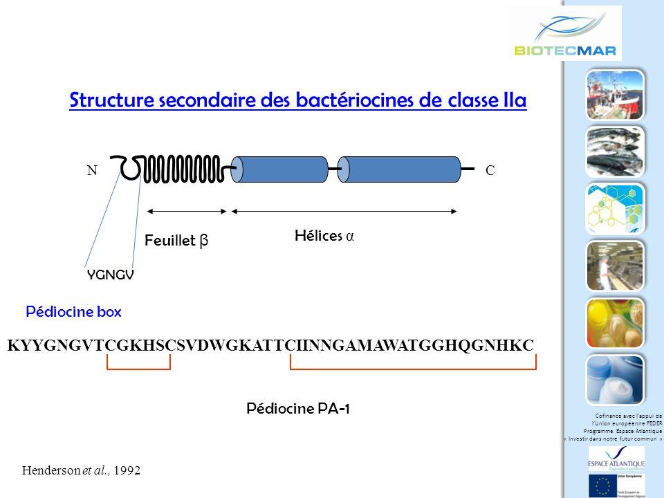Structure secondaire des bactériocines de classe IIa