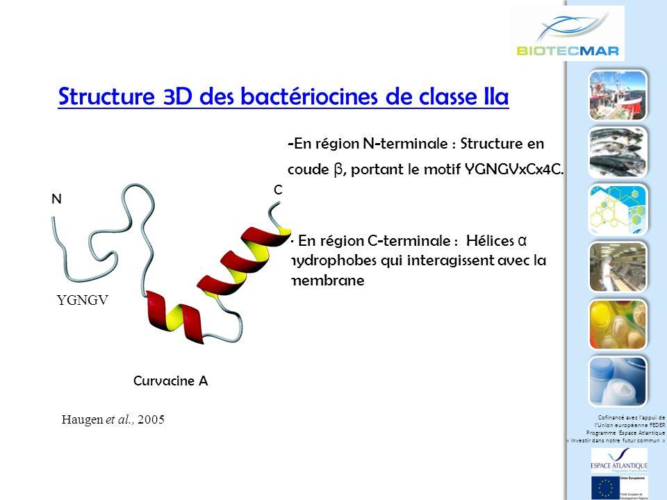 Structure 3D des bactériocines de classe IIa