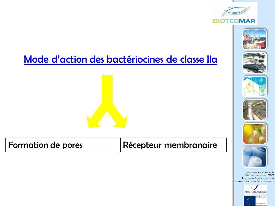 Mode d'action des bactériocines de classe IIa