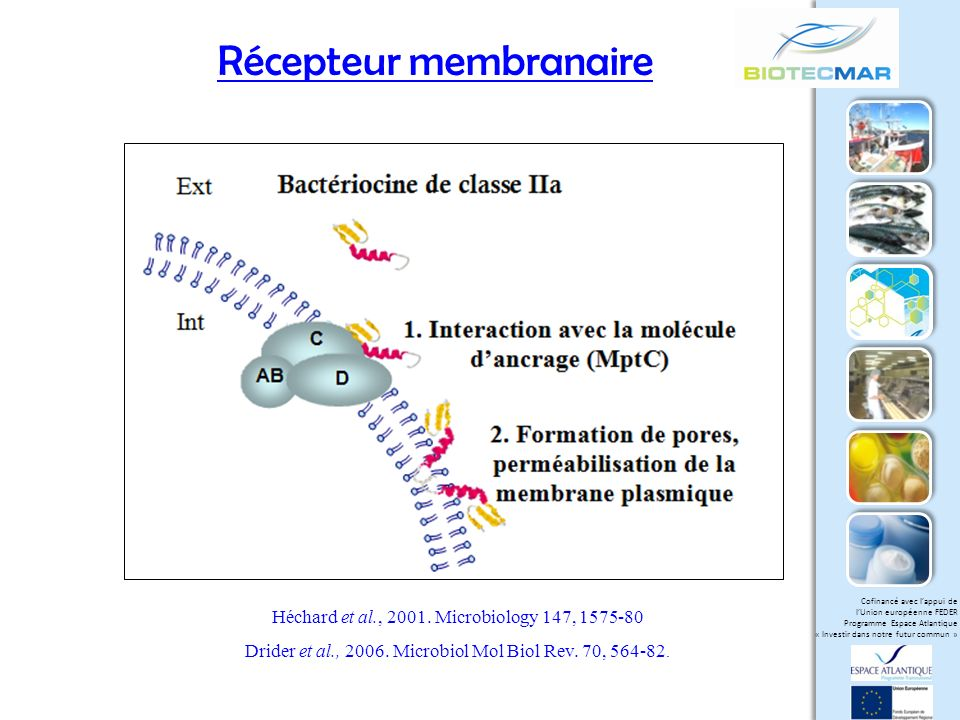 Récepteur membranaire