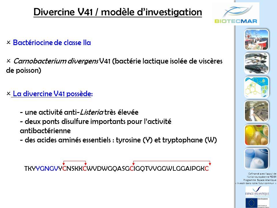 Divercine V41 / modèle d'investigation