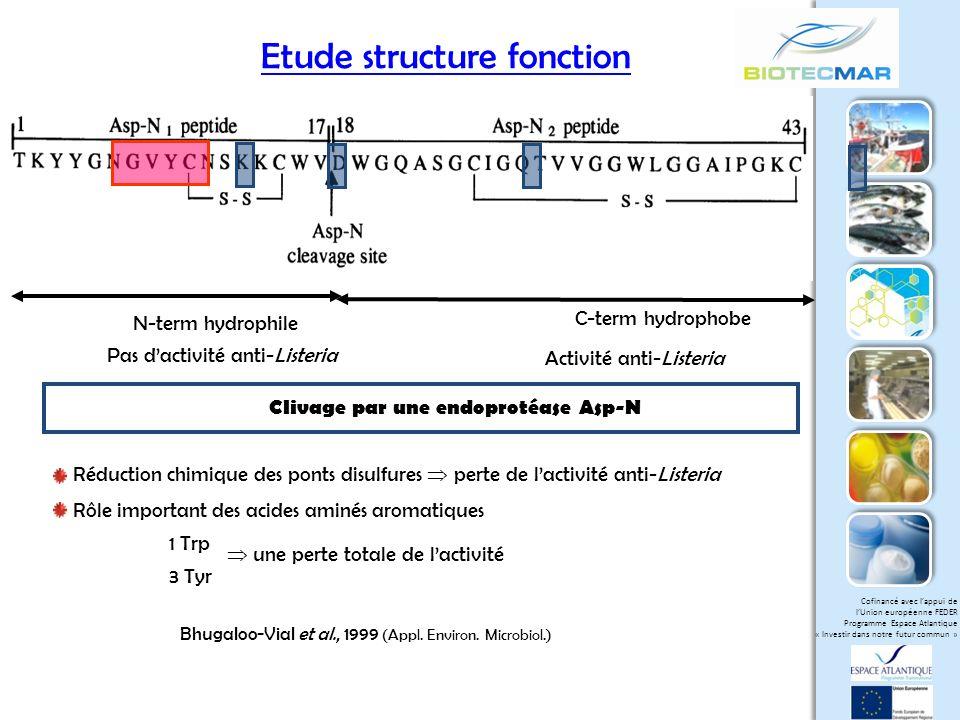Clivage par une endoprotéase Asp-N