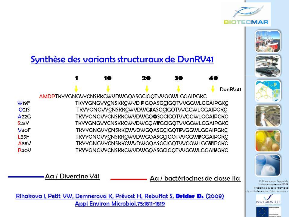 Synthèse des variants structuraux de DvnRV41