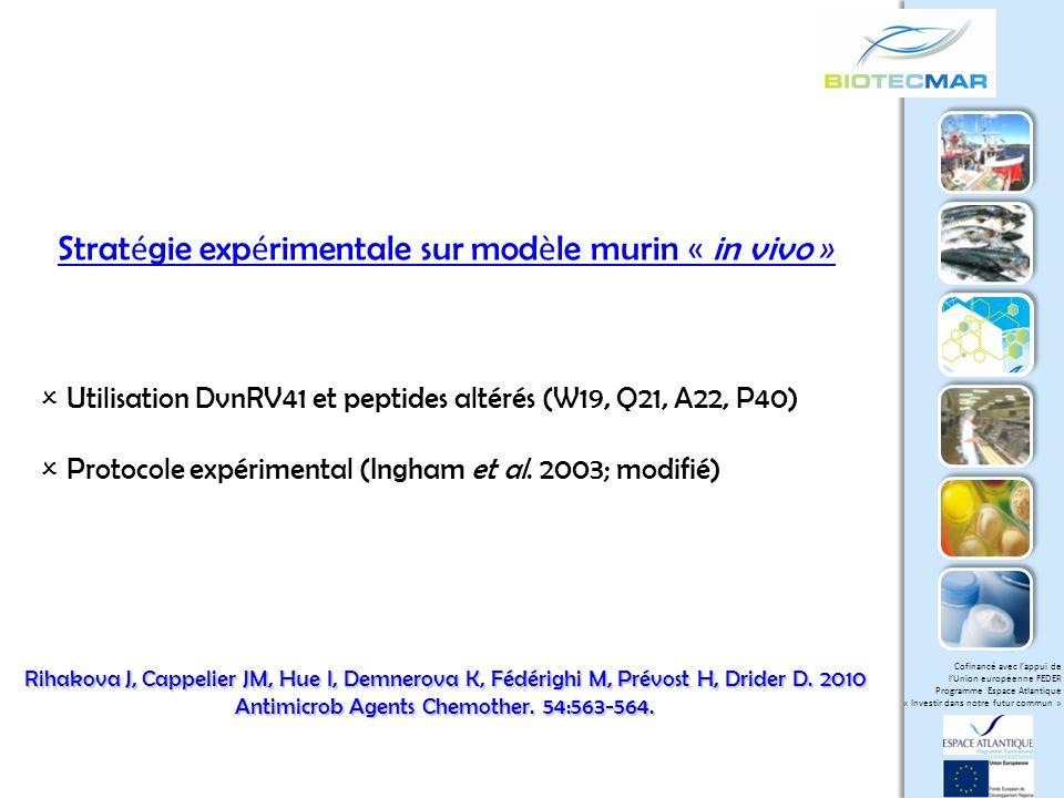 Stratégie expérimentale sur modèle murin « in vivo »