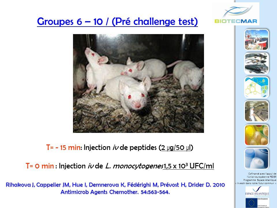 Groupes 6 – 10 / (Pré challenge test)