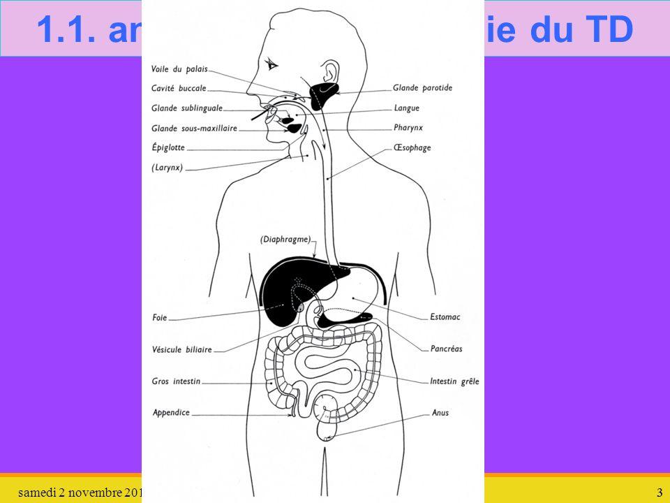 1.1. anatomie – physiologie du TD