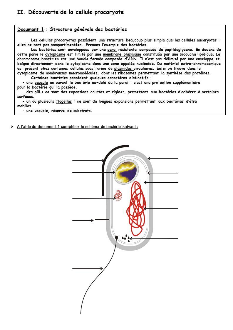 II. Découverte de la cellule procaryote